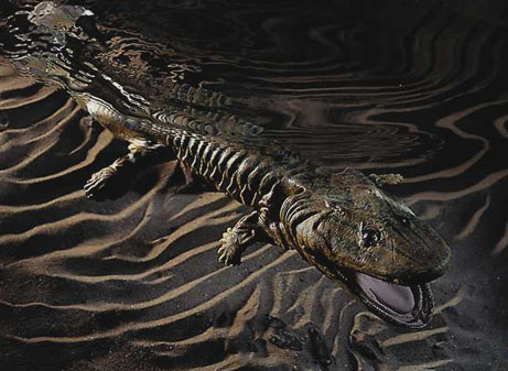 ... first amphibians were thought to look like from the Devonian period