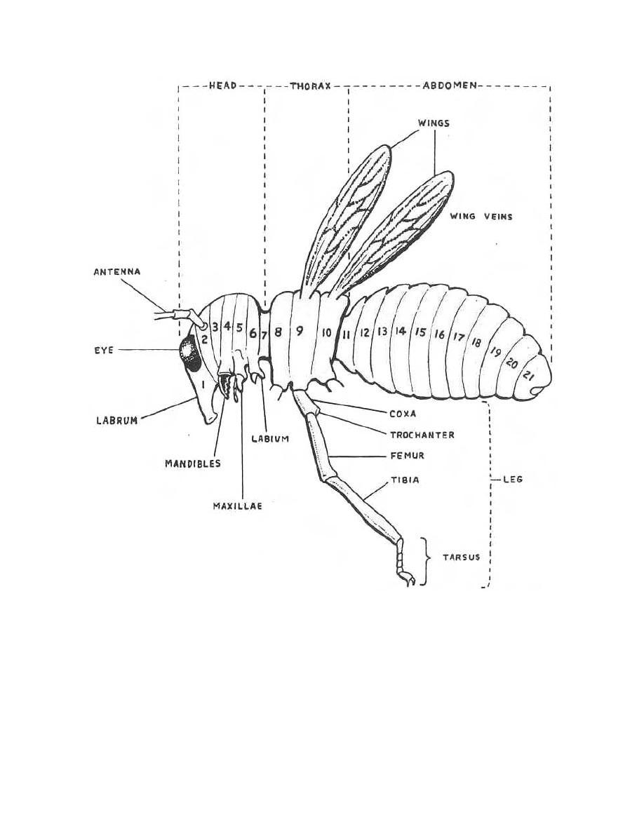 Printable Diagrams Of Arthropods - Application Wiring Diagram •