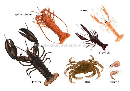 Arthropods Examples Mr. joanides' wiki pages [licensed for non ...