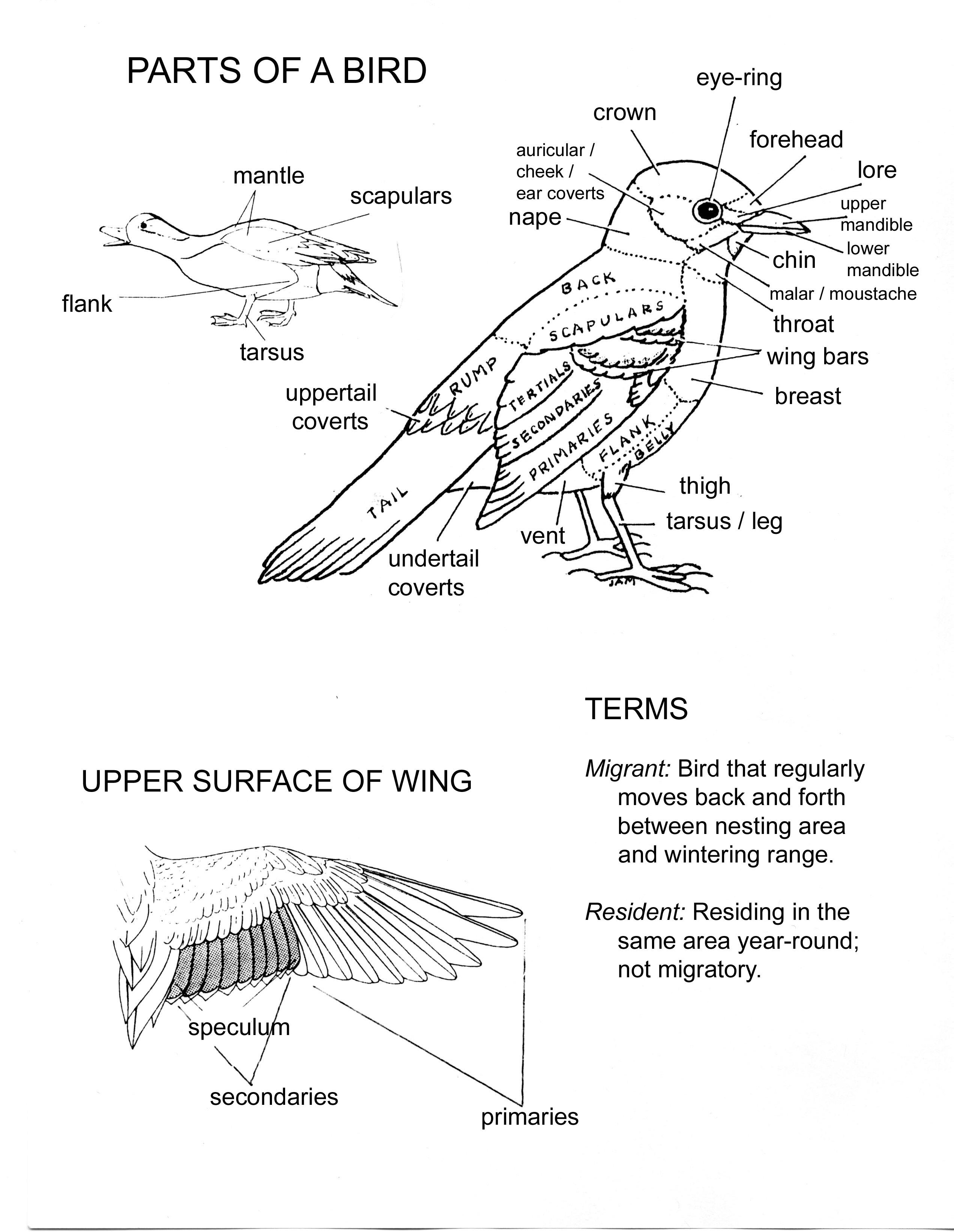 diagram of birds