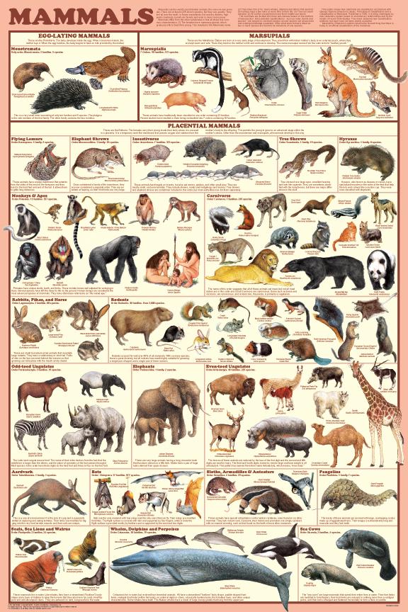 a151-mammals_poster(2).jpg